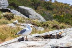 Seagulls odpoczywa na uroczym słonecznym dniu obraz stock