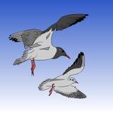 Seagulls okrąża w niebie Obraz Stock