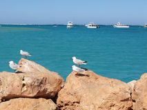 Free Seagulls On A Rock Stock Photo - 7922660