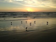 Seagulls On Atlantic Ocean Beach During Dawn. Royalty Free Stock Photos