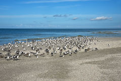 Free SeaGulls On Beach Royalty Free Stock Image - 89272196