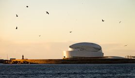 Seagulls ovanför kryssningterminalen fotografering för bildbyråer