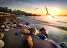Seagulls Over Beach Royalty Free Stock Image