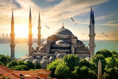 Seagulls over Blue Mosque Royalty Free Stock Image