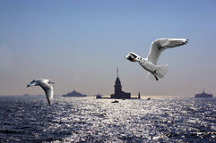 Seagulls over Bosporus Royalty Free Stock Photography
