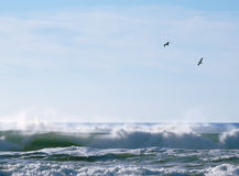 Seagulls over breaking waves Stock Photos