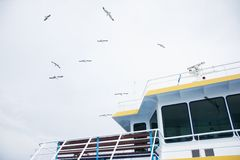 Seagulls over ferry boat Royalty Free Stock Images