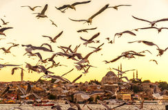 Seagulls over the Golden Horn in Istanbul at sunset Royalty Free Stock Image