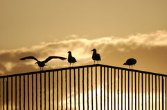 Seagulls over the handrails Royalty Free Stock Image