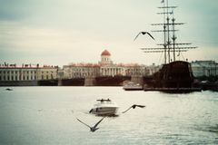 Seagulls over the Neva River. Seagulls are flying over the Neva River Royalty Free Stock Images