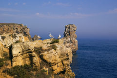 Seagulls over the ocean cliff. Three Yellow Footed Seagulls on a cliff next to the blue ocean. Peniche, Portugal Stock Image