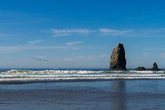 Seagulls over the ocean towards the vertical rocks that stand out in Cannon Beach, Oregon, USA. stock photos