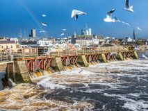 Seagulls over river ,Athlone dam in background Stock Photography