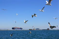 Seagulls over sea Royalty Free Stock Images