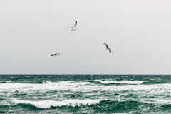 Seagulls over the sea on a cloudy day royalty free stock photo