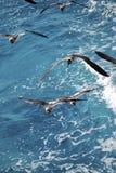 Seagulls over the sea Stock Photos