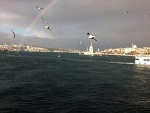 Seagulls over the sea. Seagulls sea Istanbul city Stock Image