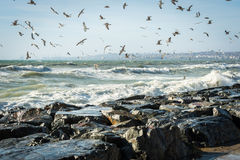 Seagulls over Sea of Marmara on a windy day Stock Images