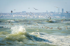 Seagulls over Sea of Marmara on a windy day Royalty Free Stock Photos