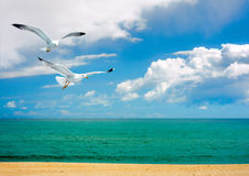 Seagulls over the sea Royalty Free Stock Images