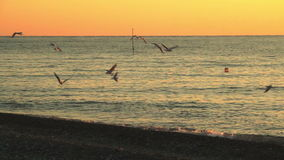 Seagulls over the sea surface at sunset stock footage