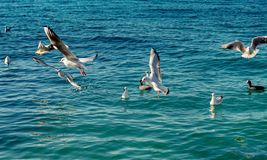 Seagulls are on and over sea waters stock photo