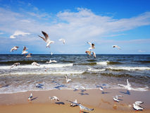 Seagulls over the sea waves Royalty Free Stock Photo