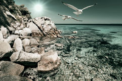 Seagulls over shallow water in Northern Greece. Seagulls over shallow water by the shore in Sithonia, Northern Greece Royalty Free Stock Photo