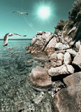 Seagulls over shallow water in Northern Greece Royalty Free Stock Photo