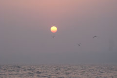 Seagulls Over Sunset. Seagulls flying in the misty sea at sunset Stock Image