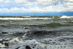 Seagulls over the water Royalty Free Stock Images