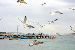 Seagulls over a Wintry Sea Stock Images