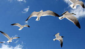 Seagulls overhead Stock Photo