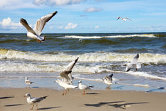 Seagulls ower sea Stock Photo