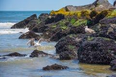 Seagulls på bryggan Arkivfoto