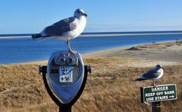 Seagulls på den Chatham stranden royaltyfri fotografi