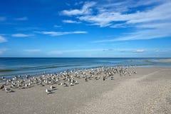 Seagulls på den härliga Florida kustlinjen Arkivbilder