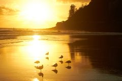 Seagulls på en härlig guld- strand på soluppgång arkivfoto