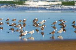 Seagulls på en strand Arkivfoto