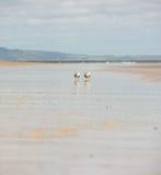 Seagulls på en strand, låg vinkel Arkivfoto