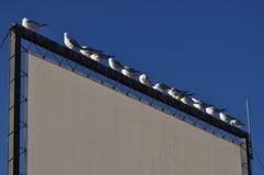 Seagulls på ett bräde över floden Arkivbilder