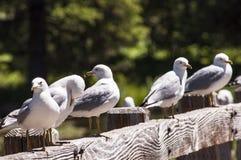Seagulls på kabinen för Johnny Sack ` s arkivfoto