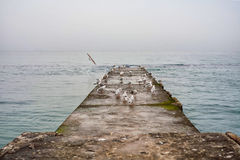 Seagulls på kajen på höjden av havet Dimma kallt höstväder, stillhet Black Sea kust, Odessa, Ukraina, Eastern Europe royaltyfri bild