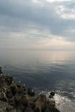 Seagulls på kusten Fotografering för Bildbyråer