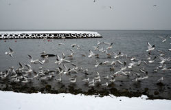 Seagulls på kusten en vinterdag Arkivfoto