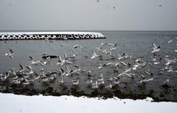 Seagulls på kusten en vinterdag Royaltyfria Bilder