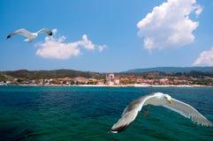 Seagulls vid Ouranoupolis, Mount Athos, Grekland Arkivfoto