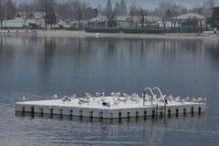 Seagulls på plattformen Royaltyfria Bilder