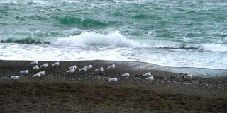Seagulls på segla utmed kusten Royaltyfri Bild