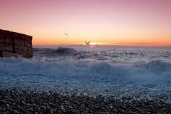 Seagulls på segla utmed kusten Arkivfoton